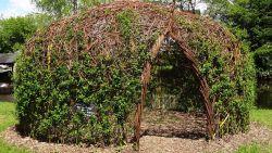 Osier (Architecture végétale - Vannerie)